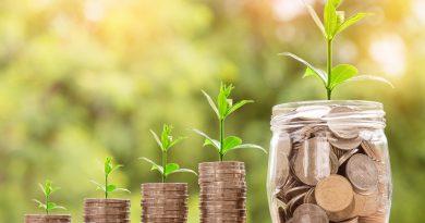 pieniądze i rośliny, w tle drzewa